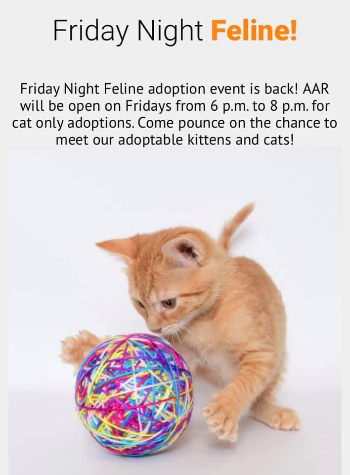 Friday Night Felines